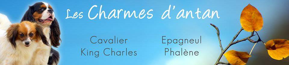 Blog des Charmes d'Antan